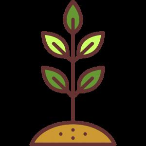 Поливать нужно корень. И тогда питание получат все листья